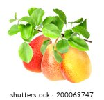 Bunch Of Fresh Red Yellow Pear...