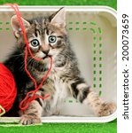 Stock photo cute kitten playing red clew of thread in box on artificial green grass 200073659