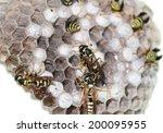 hornet's nest with wasps | Shutterstock . vector #200095955