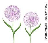 allium flower  decorative bow...