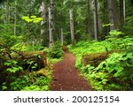 Forest Trail In British Columbia
