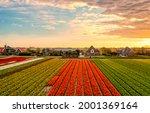 Tulip Farm Field At Sunset....