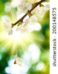 image of a beautiful blossoming ...   Shutterstock . vector #200148575