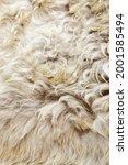 Texture Of Fur  Macro Colored...