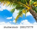 coconut palm trees perspective... | Shutterstock . vector #200175779