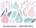 collection of vector fern... | Shutterstock .eps vector #2001807341