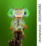 Damselfly Close Up Insect Macro ...