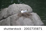 two seagulls are sitting on a... | Shutterstock . vector #2002735871