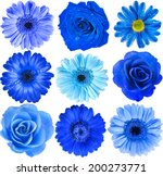 Various Blue Flowers Head Top...