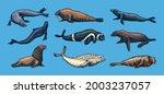 fur seal  steller sea lion and... | Shutterstock .eps vector #2003237057