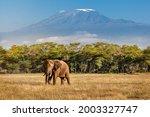 Kilimanjaro In Africa Walking...