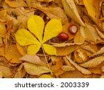 Horse Chestnut Autumn Background