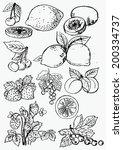 berry fruit | Shutterstock .eps vector #200334737