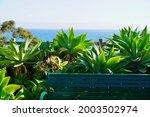 Green Bench And Green Cactus At ...