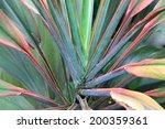 leaf backgrounds   Shutterstock . vector #200359361