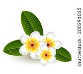 vector illustration   plumeria... | Shutterstock .eps vector #200391035