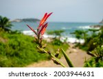 Flower On The Edge Of The Sea...