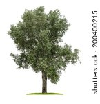 isolated deciduous tree on a... | Shutterstock . vector #200400215