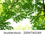 fresh green trees and sunbeams   Shutterstock . vector #2004760184