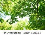 fresh green trees and sunbeams   Shutterstock . vector #2004760187