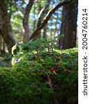 mossy forest in odaigahara ...   Shutterstock . vector #2004760214