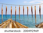 Small photo of Octopus palpus drying at the sun