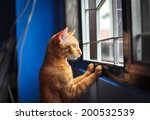 Stock photo red little cat looking out the window 200532539