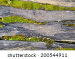 Tree Bark With Moss  Abstract...