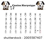 chromosome number in dog.... | Shutterstock .eps vector #2005587407