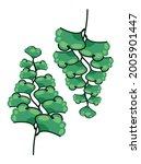 southern maidenhair fern ... | Shutterstock .eps vector #2005901447