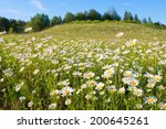 The Hill With Camomiles A...