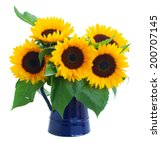 Fresh Sunflowers  Flowers...