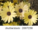 yellow flowers   floral...   Shutterstock . vector #2007258