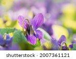 Close Up Beautiful Flowers...
