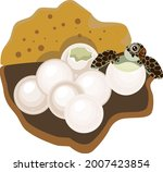 cartoon sea turtle hatching out ... | Shutterstock .eps vector #2007423854
