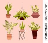 house plants. home houseplant...   Shutterstock .eps vector #2007999704