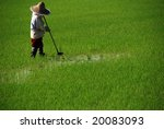farmer working in the paddy... | Shutterstock . vector #20083093