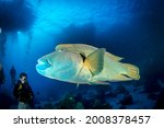 Red Sea  Africa October 2015 ...