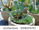 Green Cactus Pot At Patio