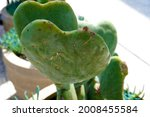 Green Hart Shaped Cactus Pot
