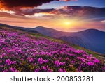 magic pink rhododendron flowers ... | Shutterstock . vector #200853281