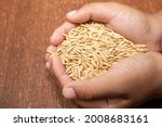Kid Hands Holding Rice.jasmine...