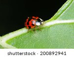 Red With Black Spots Ladybug...