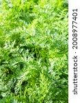 Vertical Garden Background  ...