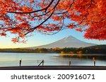 Fuji Maple