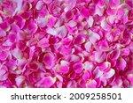 Pink Purple Organic Texture...
