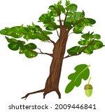 cartoon oak tree with green... | Shutterstock .eps vector #2009446841