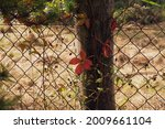 The Fence Is Overgrown With...