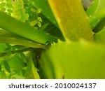 Small Green Animal  Nestled...