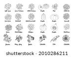 vector food icons. colored...   Shutterstock .eps vector #2010286211